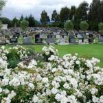 Avenue-Cemetery-Levin (13)