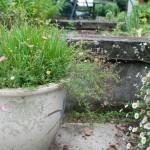Farmhouse-backyard (11)