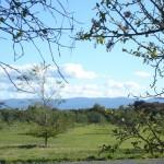 Olive-Grove (1)