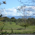 Olive-Grove (5)