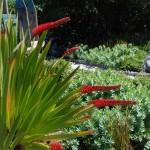 Rebecca's-Garden (8)