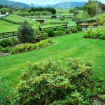 Rural-Waikanae (5)