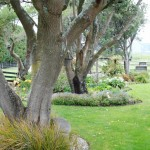 Rural-Waikanae (7)
