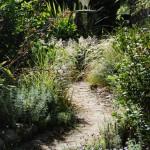 Waikuku-Woodland (2)