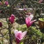Waikuku-Woodland-Garden (18)
