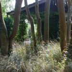 Waikuku-Woodland-Garden (27)