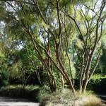 Waikuku-Woodland-Garden (28)