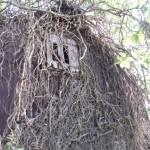 Waikuku-Woodland-Garden (6)