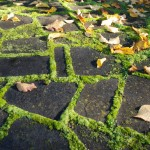 Waikuku-Woodland-Garden (7)