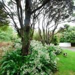 Waikanae-Woodland-Drive (1)
