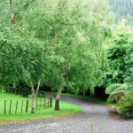 Waikanae-Woodland-Drive (12)