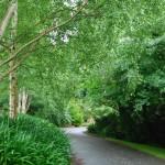 Waikanae-Woodland-Drive (13)