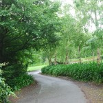 Waikanae-Woodland-Drive (14)