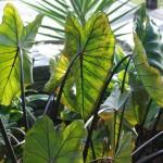 Waikanae Tropics (39)
